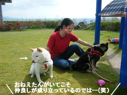 わんこお花見2010!58