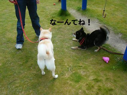 わんこお花見2010!53
