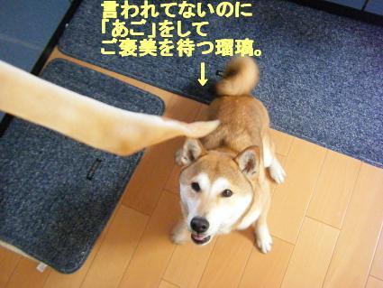 2010 04 25ぶたみみ1