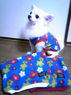 バニラちゃんから服のプレゼント