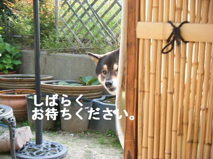 しばらく2010 05 03 071
