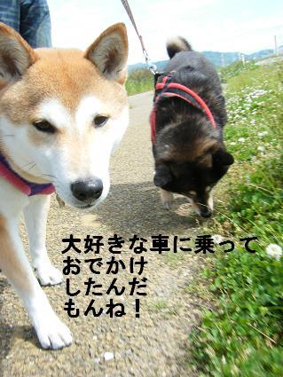 2010 05 29 河川敷1