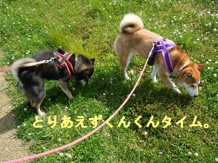 2010 05 29 河川敷2