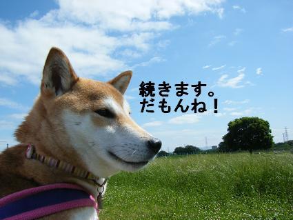 2010 05 29 河川敷7