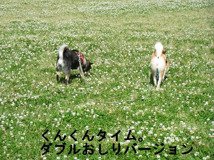 2010 05 29 河川敷15