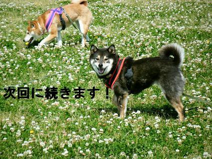 2010 05 29 河川敷16
