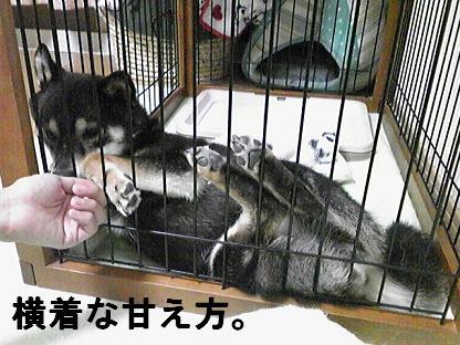 しばらく0822(2010 07 09 010