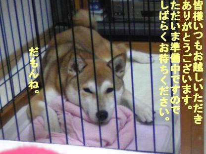しばらく0824(2010 07 24 004