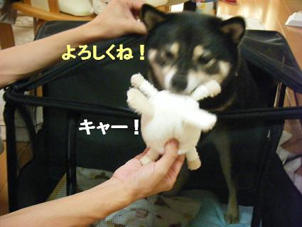 コピー ~ 2010 09 12 006