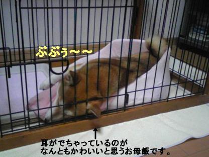 しばらく0913コピー ~ 2010 07 28 002