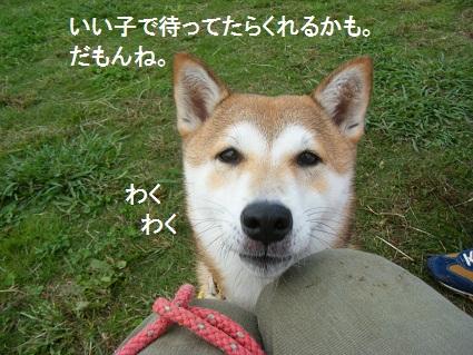 しばらく20101030