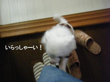 20101019バニラくん家へ