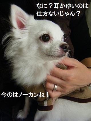20101019バニラくん家へ12