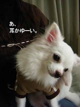20101019バニラくん家へ11