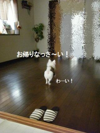 20101019バニラくん家へ14