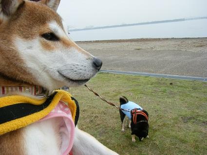 20101113琵琶湖