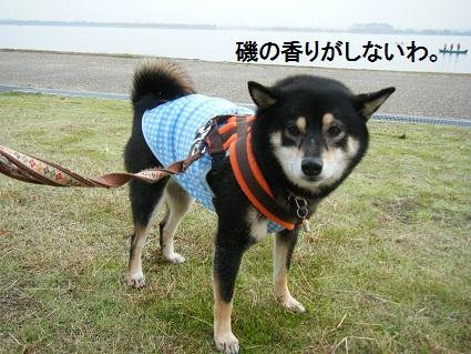 20101113琵琶湖1