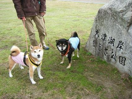 20101113琵琶湖2