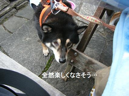 20101113琵琶湖6