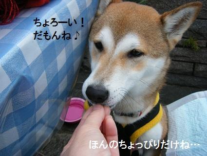20101113琵琶湖10