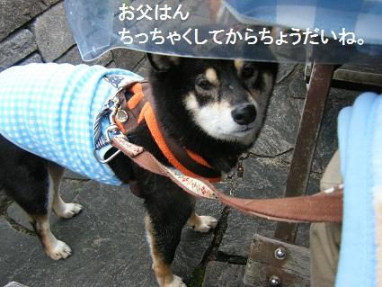 20101113琵琶湖11
