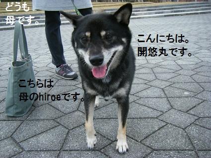 20101113琵琶湖22