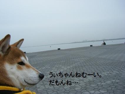 20101113琵琶湖18