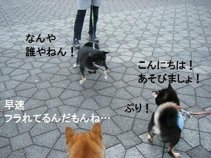 20101113琵琶湖21