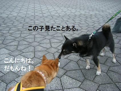 20101113琵琶湖20