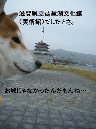 20101113琵琶湖27