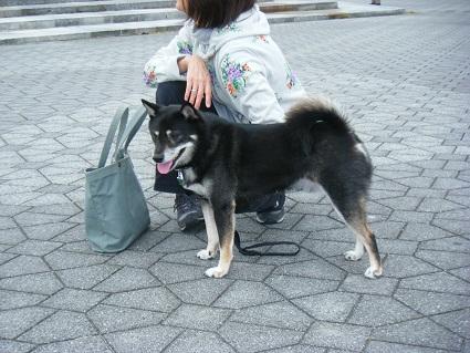 20101113琵琶湖25