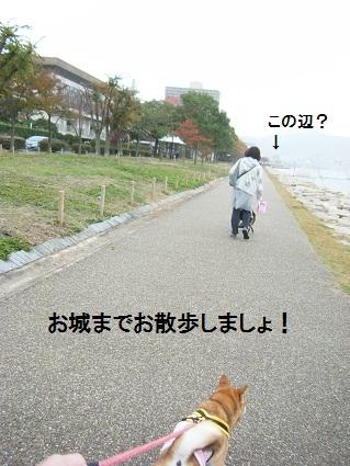 20101113琵琶湖26