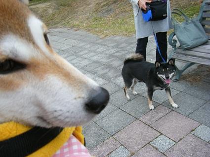 20101113琵琶湖28