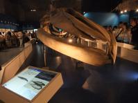 科学博物館1