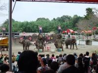 象のショー