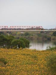 今日も綺麗な長良川