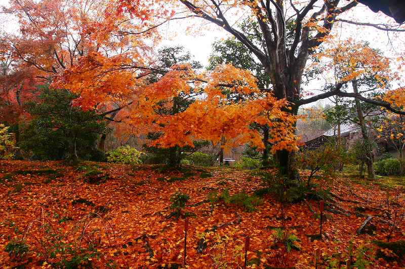 嵐山神戸ルミナリエ20091205 029