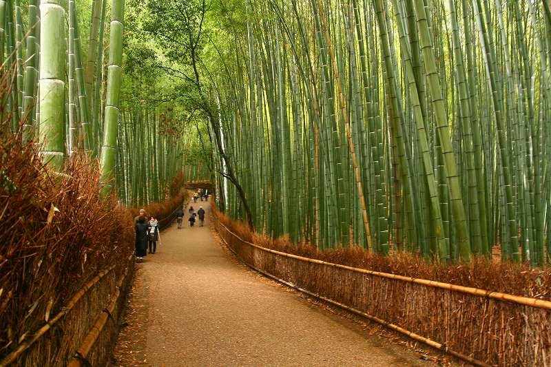 嵐山神戸ルミナリエ20091205 045