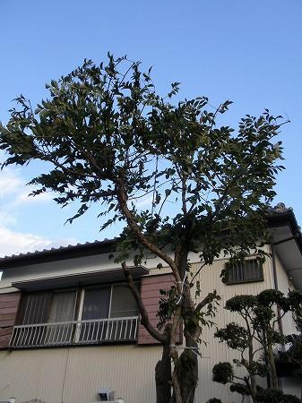 花・植物 909