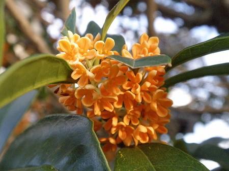 花・植物 904