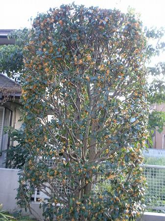 花・植物 908
