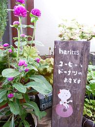 コピー ~ haritts (1)