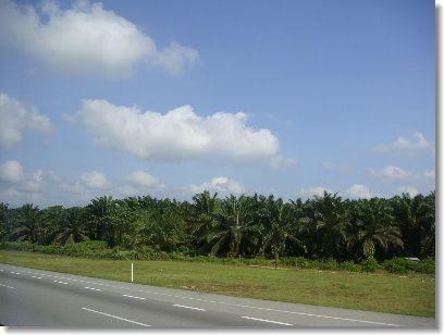 2009jb.jpg