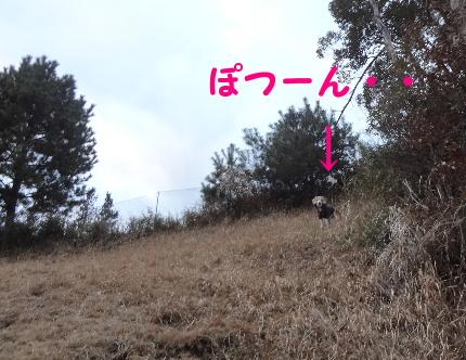 20120216mocha5.jpg