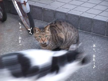 DSCF9808.jpg