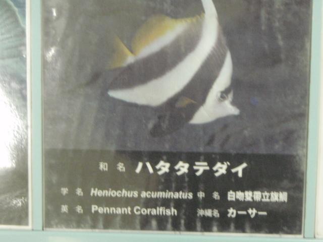 P3310495.jpg