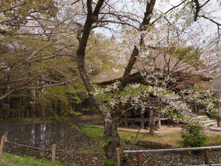 Chusonji_20100504_5.jpg