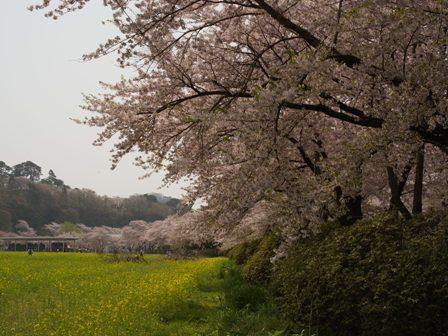 KitakamiTensyouchi_20100505_5.jpg