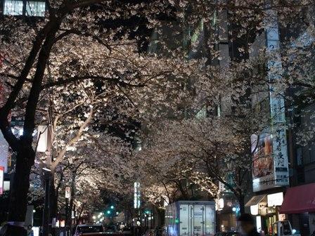 SakuraAve_20100329.jpg