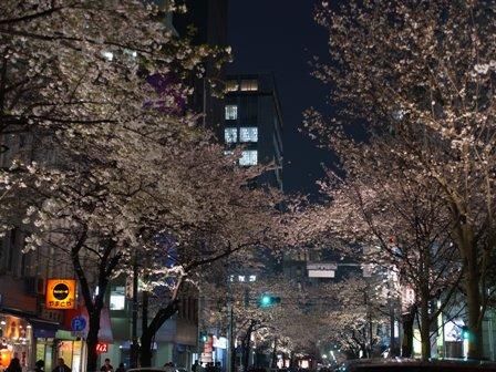 SakuraStreet_20100405.jpg